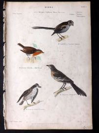 Richardson 1862 HC Bird Print. Long Tailed Titmouse, Mocking Bird, Robin